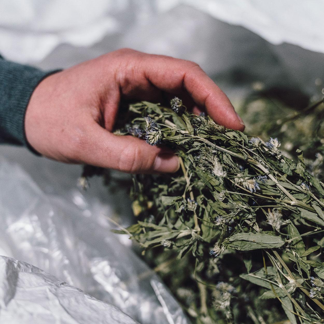 importation et grossiste de produits alimentaires bio responsables ethiques et durables sur le marché Suisse